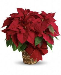 Red Poinsettia from Brennan's Secaucus Meadowlands Florist