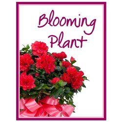 Blooming Plant Deal of the Day from Brennan's Secaucus Meadowlands Florist