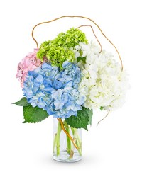 Sweet Hydrangea from Brennan's Secaucus Meadowlands Florist