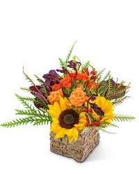 Harvest Season from Brennan's Secaucus Meadowlands Florist