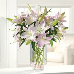Ooh-la-la lillies from Brennan's Secaucus Meadowlands Florist