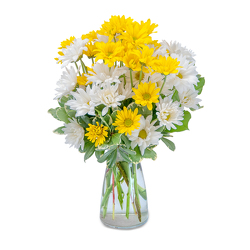 Dazed Daisies from Brennan's Secaucus Meadowlands Florist