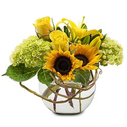 Sunshine Rays from Brennan's Secaucus Meadowlands Florist