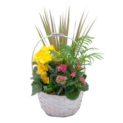 Bloomin' Sunshine Days Basket from Brennan's Secaucus Meadowlands Florist