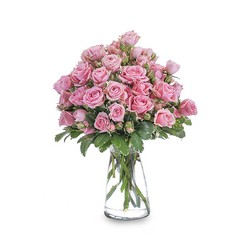 Pink Twinkle from Brennan's Secaucus Meadowlands Florist