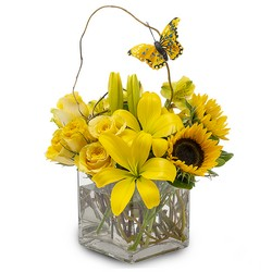 Butterfly Effect from Brennan's Secaucus Meadowlands Florist
