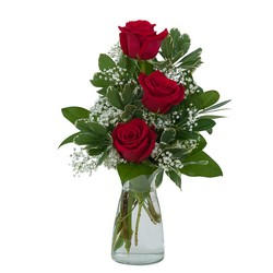 Simply Roses from Brennan's Secaucus Meadowlands Florist