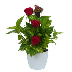 Green plant in Ceramic with Fresh Roses from Brennan's Secaucus Meadowlands Florist