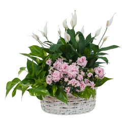 Living Blooming  White Garden Basket  from Brennan's Secaucus Meadowlands Florist