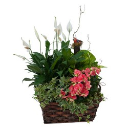 Living Blooming  Garden Basket  from Brennan's Secaucus Meadowlands Florist