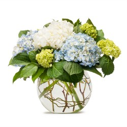 Mighty Hydrangea from Brennan's Secaucus Meadowlands Florist
