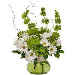 Dots and Daisies from Brennan's Secaucus Meadowlands Florist