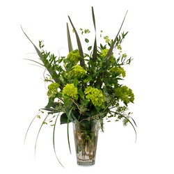 Natural Green from Brennan's Secaucus Meadowlands Florist