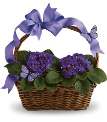 Violets And Butterflies from Brennan's Secaucus Meadowlands Florist
