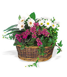 Traditional European Garden Basket from Brennan's Secaucus Meadowlands Florist